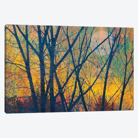 Meadow Trees I Canvas Print #CHV27} by Christopher Vest Canvas Print