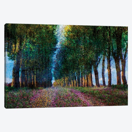 Row of Trees Provence Canvas Print #CHV29} by Christopher Vest Canvas Wall Art