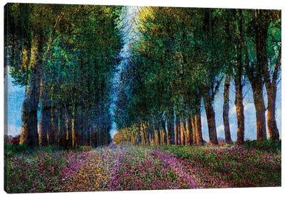 Row of Trees Provence Canvas Art Print