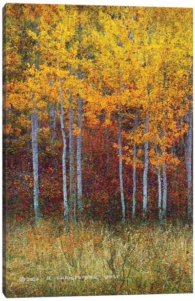Aspen Forest Autumn Left Canvas Art Print