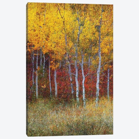 Aspen Forest Autumn Right Canvas Print #CHV31} by Christopher Vest Canvas Print