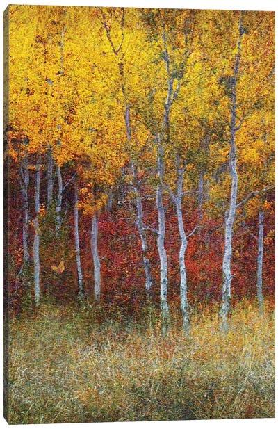 Aspen Forest Autumn Right Canvas Art Print