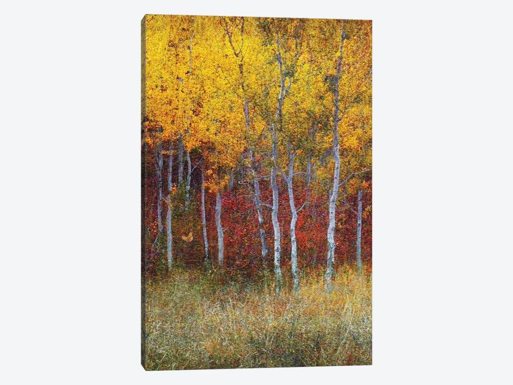Aspen Forest Autumn Right by Christopher Vest 1-piece Art Print