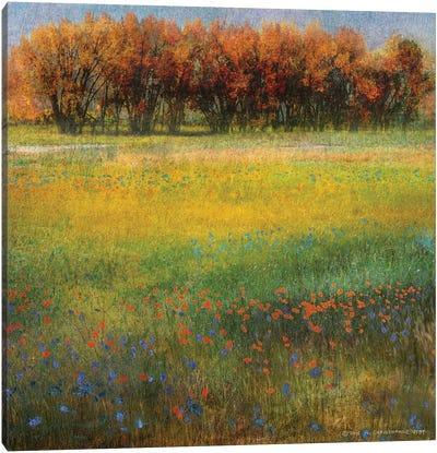 Meadow Flowers II Canvas Art Print