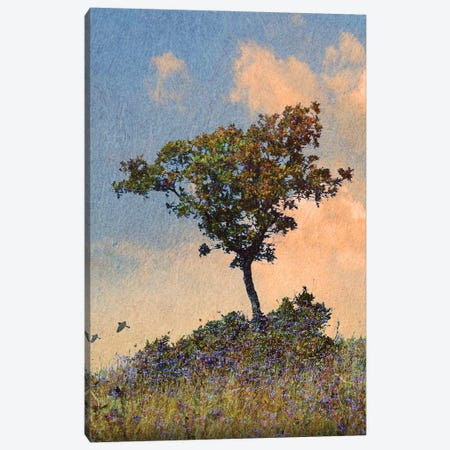 Oak Tree Left Canvas Print #CHV42} by Christopher Vest Canvas Art