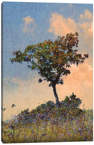 Oak Tree Left Canvas Art Print