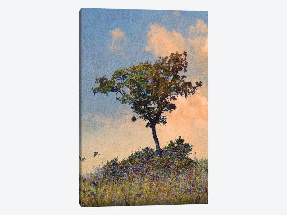 Oak Tree Left by Christopher Vest 1-piece Canvas Art Print