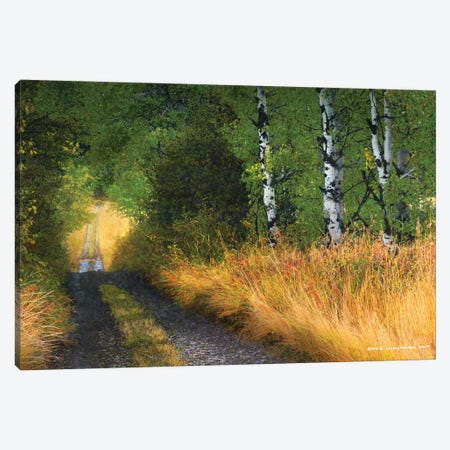 Road Thru The Trees Canvas Print #CHV45} by Christopher Vest Canvas Art Print