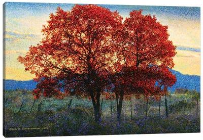 Twin Oaks Canvas Art Print