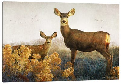 Doe And Fawn Canvas Art Print