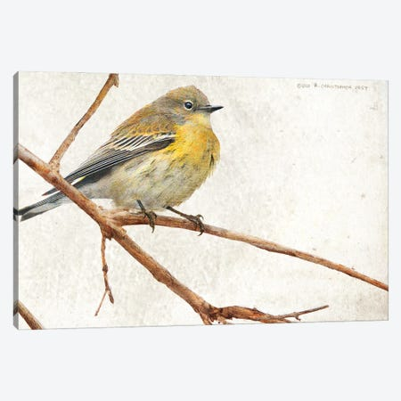 On The Branch III Canvas Print #CHV54} by Christopher Vest Canvas Wall Art