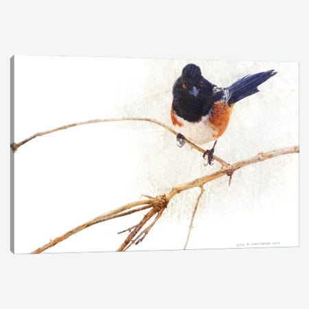 On The Branch IV Canvas Print #CHV55} by Christopher Vest Canvas Artwork