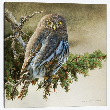 On The Branch VI Canvas Print #CHV57} by Christopher Vest Canvas Art