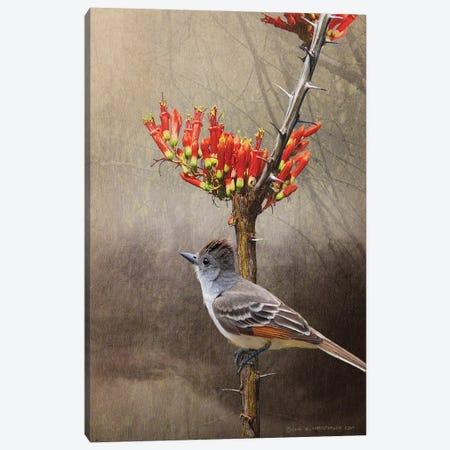 Ocotillo Flycatcher Canvas Print #CHV5} by Christopher Vest Art Print