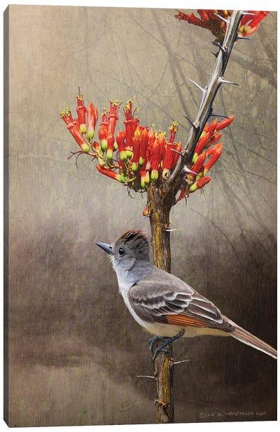 Ocotillo Flycatcher Canvas Art Print