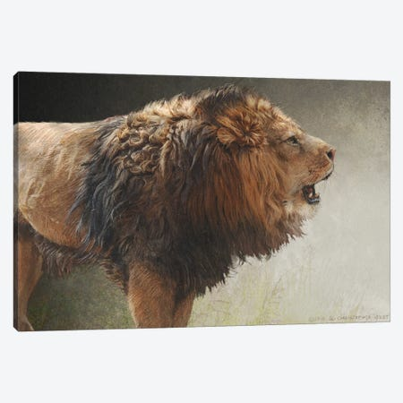 Roaring Lion Canvas Print #CHV8} by Christopher Vest Canvas Wall Art