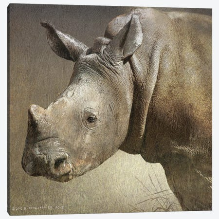 Young White Rhino Canvas Print #CHV9} by Christopher Vest Canvas Wall Art