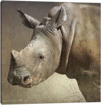 Young White Rhino Canvas Art Print