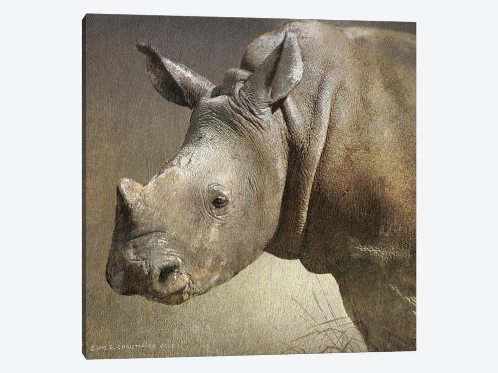 Young White Rhino by Christopher Vest 1-piece Canvas Print