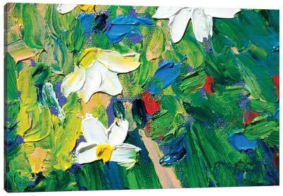 Margherite Canvas Art Print