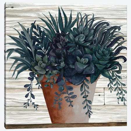 Remarkable Succulents I Canvas Print #CJA244} by Cindy Jacobs Canvas Art