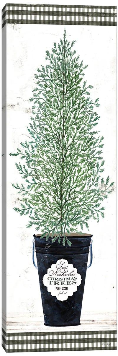Cedar Tree    Canvas Art Print