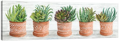 Terracotta Pots II Canvas Art Print