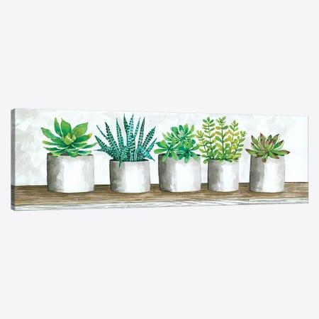 Succulent Pots Canvas Print #CJA301} by Cindy Jacobs Canvas Art
