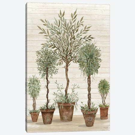 Potted Tree Collection Canvas Print #CJA310} by Cindy Jacobs Canvas Art Print