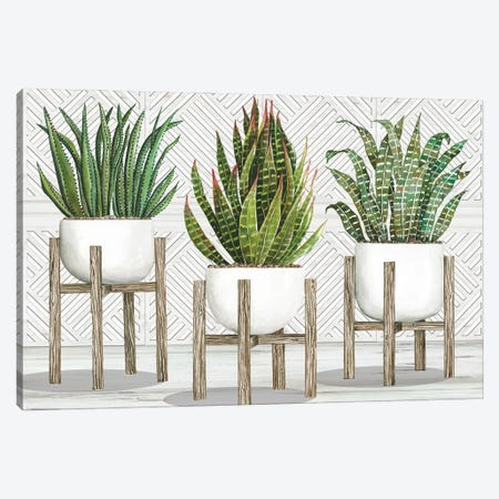 Succulent Trio on Stands Canvas Print #CJA359} by Cindy Jacobs Art Print