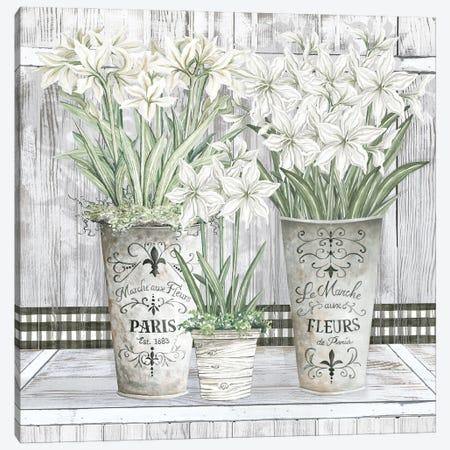 Amaryllis Multi Pots Canvas Print #CJA425} by Cindy Jacobs Canvas Wall Art