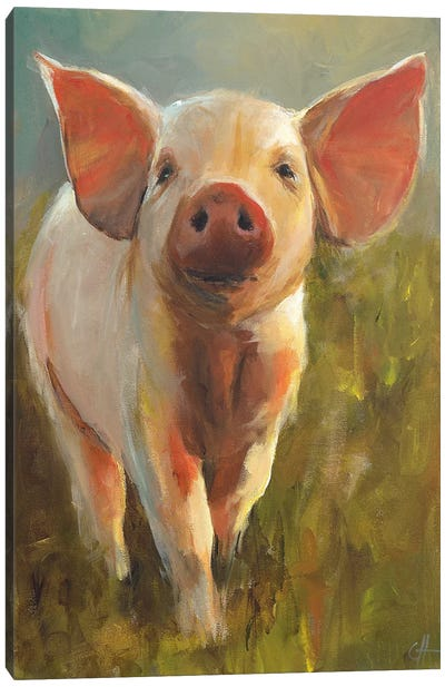 Morning Pig Canvas Art Print