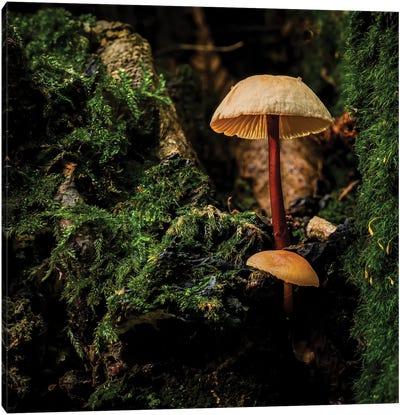 Woodland Mushroom Canvas Art Print