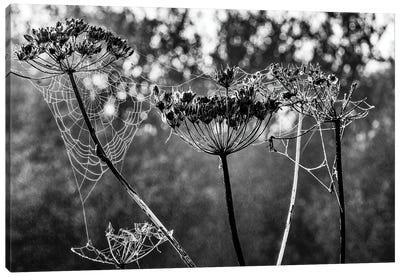 Cobwebs And Seed Heads Canvas Art Print
