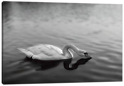 Serpentine Swan, Hyde Park London Canvas Art Print