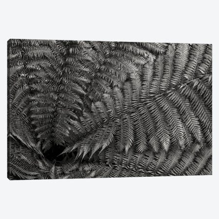 Nature Forms: The Ferns Canvas Print #CKP58} by Colin Kemp Photography Canvas Art Print