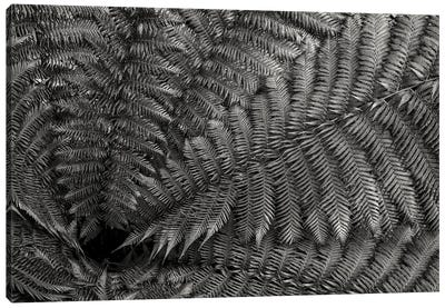 Nature Forms: The Ferns Canvas Art Print