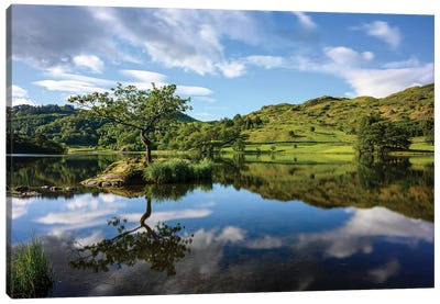 Lone Tree At Rydal Water, Lake District Canvas Art Print