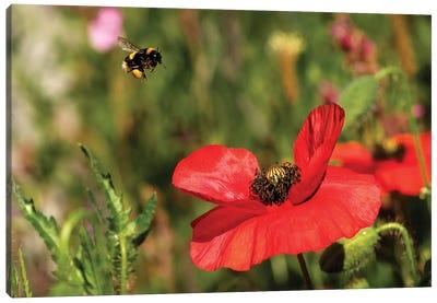 Bee & Poppy - Lunch Date Canvas Art Print