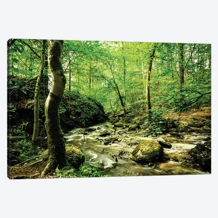 Woodland Stream, Lake District Canvas Print #CKP65} by Colin Kemp Photography Art Print