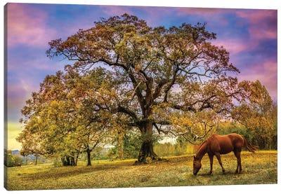 Under The Old Oak Tree Canvas Art Print