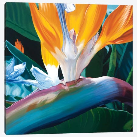 Bird Of Paradise Canvas Print #CLH10} by Chloe Hedden Canvas Wall Art