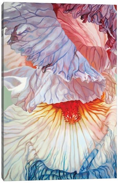 Fading Iris Canvas Art Print