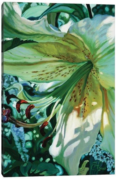 Janes Lily Canvas Art Print