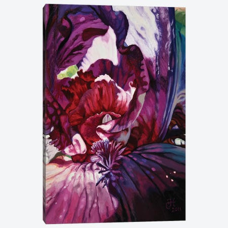 Purple Iris Canvas Print #CLH60} by Chloe Hedden Canvas Print