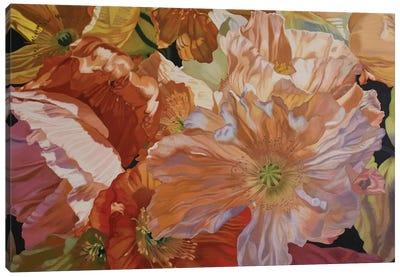 Salt Spring Poppies Canvas Art Print
