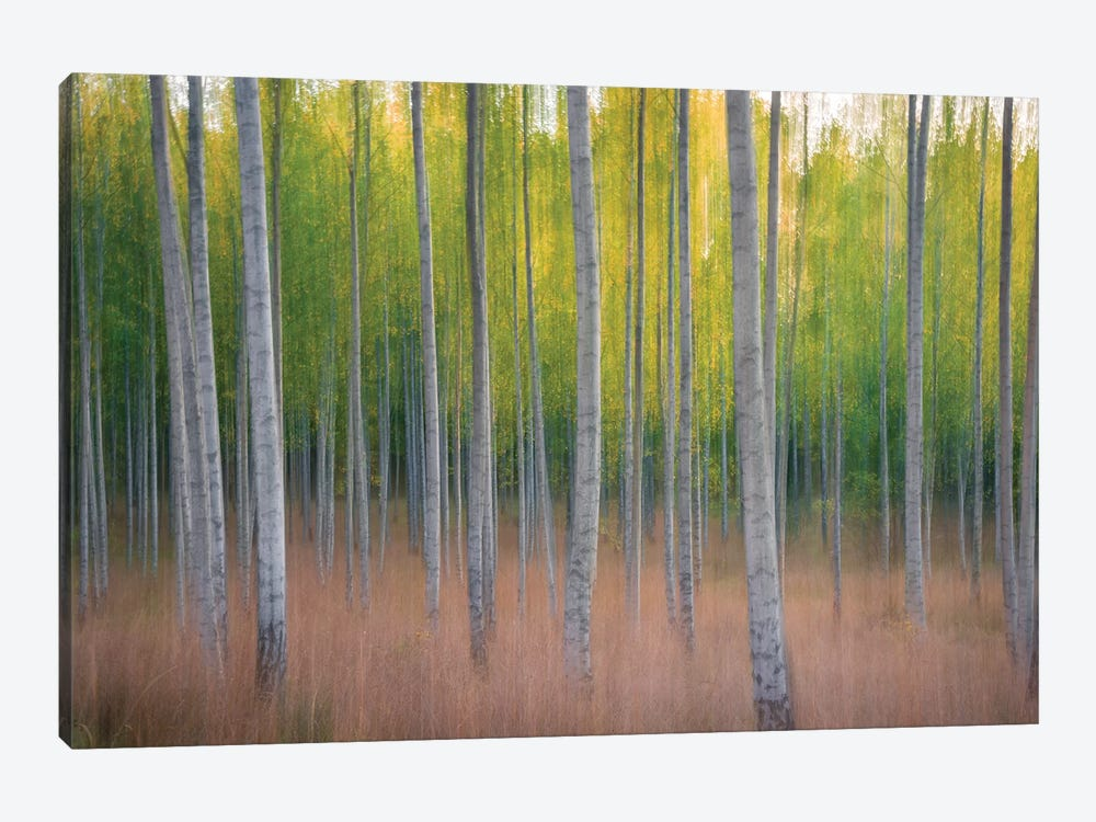 Intentional Camera Movement by Christian Lindsten 1-piece Canvas Wall Art