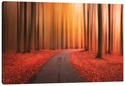 Path To Unknown Canvas Art Print