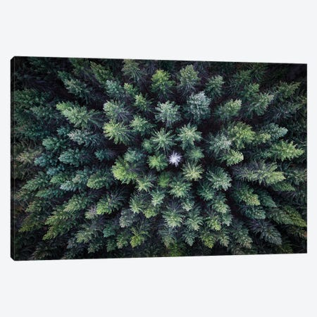 Dead Tree Surrounded By Alive Trees, Drone Photo. Canvas Print #CLI1} by Christian Lindsten Canvas Artwork
