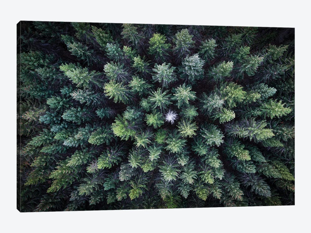 Dead Tree Surrounded By Alive Trees, Drone Photo. by Christian Lindsten 1-piece Art Print
